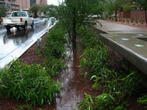 Recessed roadside landscaping is part of  green infrastructure at ASU's  Phoenix campus.