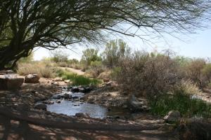 Gilbert's Riparian Preserve at the Water Ranch