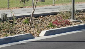 Curb cuts help direct storm runoff into landscaping.
