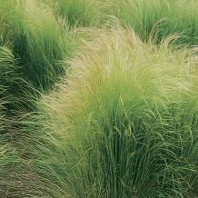 © Charles Mann, Landscape Plants for the Arizona Desert
