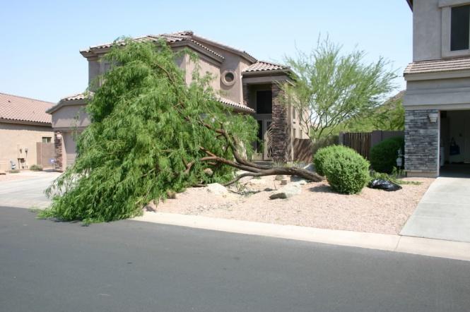 ma_tree down